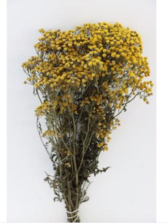 Dried Flower Tanacetum Yellow Trockenblume