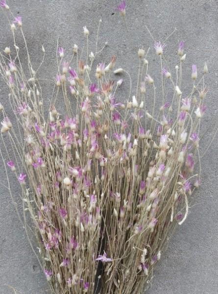 Dried Flower Trockenblumen Bund Depressa Papyrus