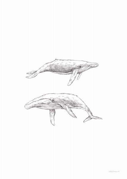 Postkarte Wale