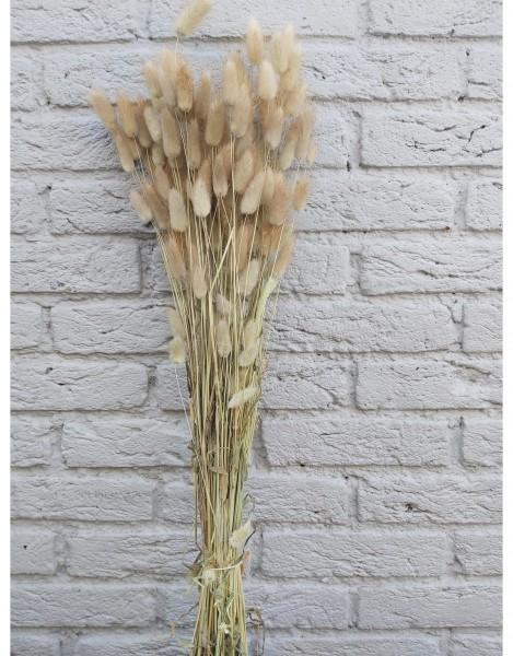 Deko Blume Lagurus - Trockenblumen- Samtgras -Natur-